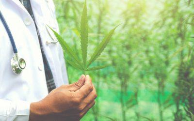 Le cannabis: un produit interdit par la loi