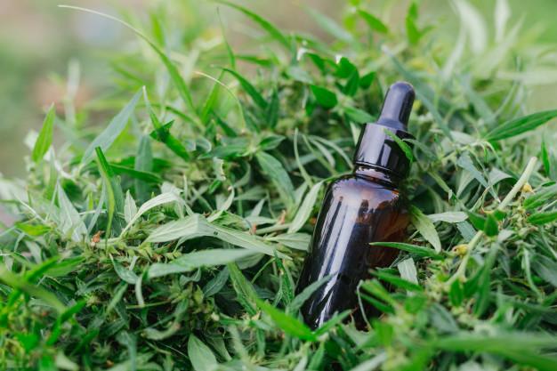 La prolifération de la production du cannabis en France