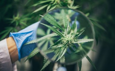 Expérimentation, type de maladie  et effet du cannabis médical